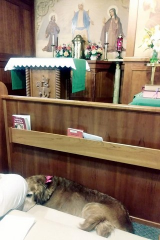 Dog in church