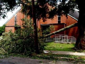 downed tree by church